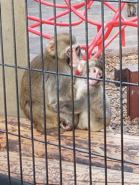 旭山動物園 今年はたくさん行きました。